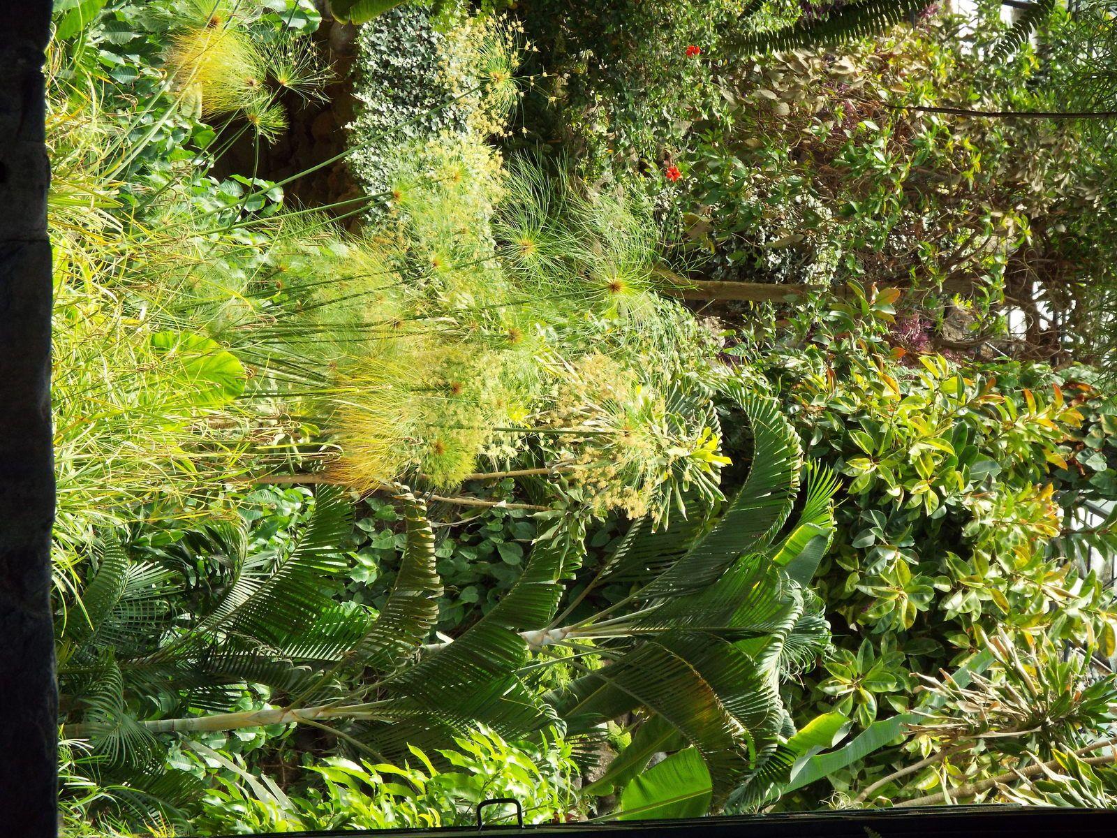 Estufa fria lisbonne jardin de - Estufa de jardin ...