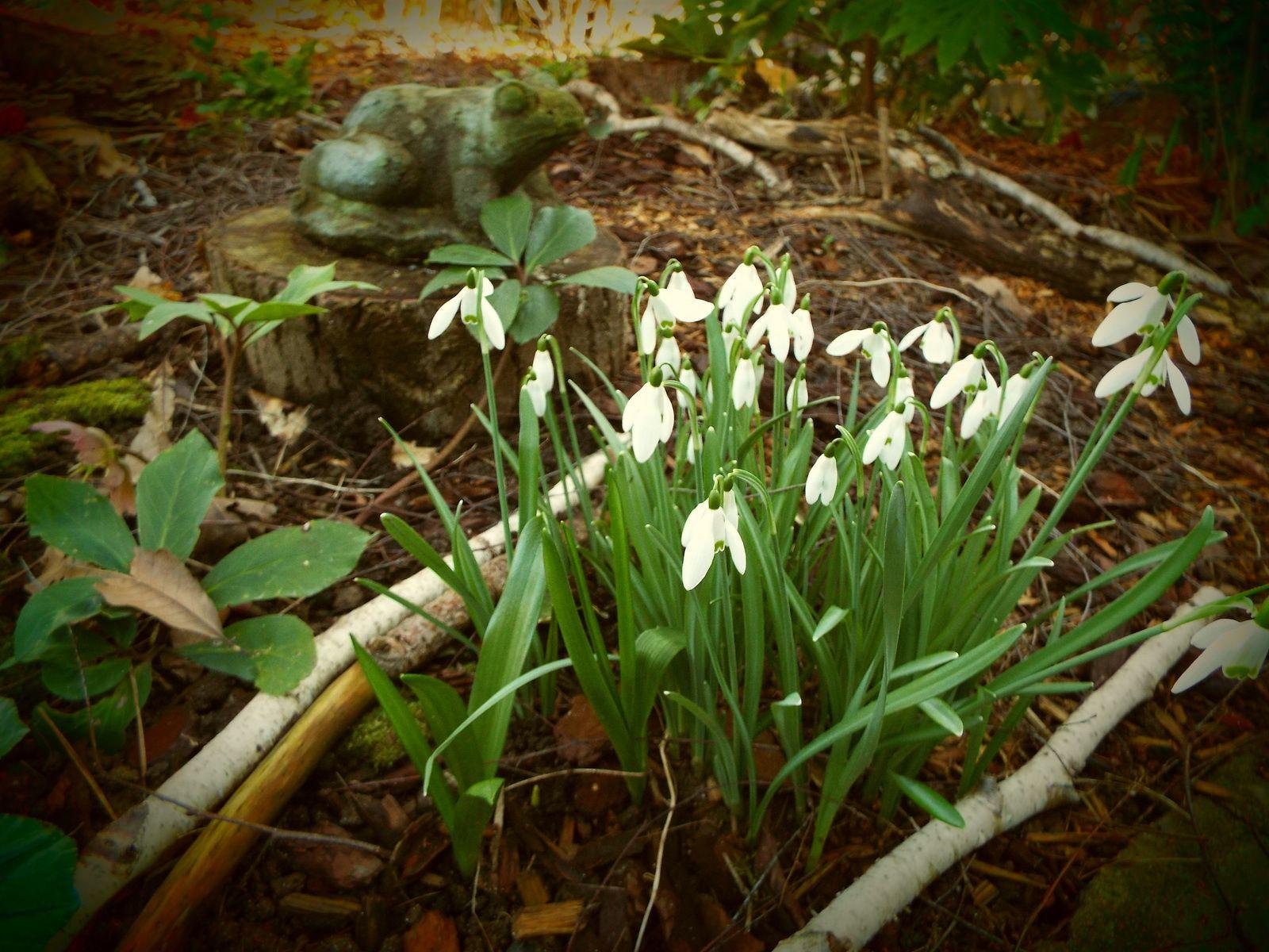 Le jardin fin f vrier jardin de for Jardin fevrier