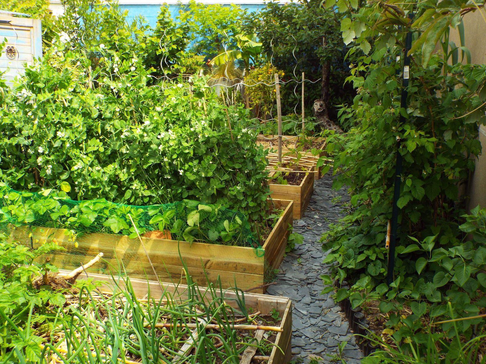 Attention, jardin en pleine croissance !