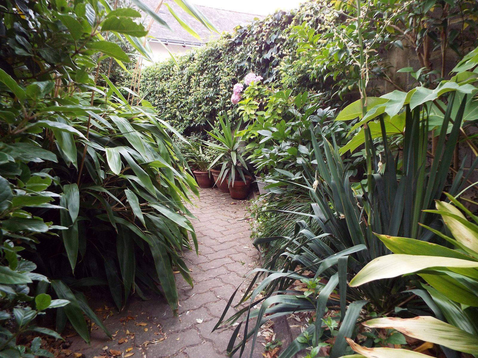 Le jardin en juillet.