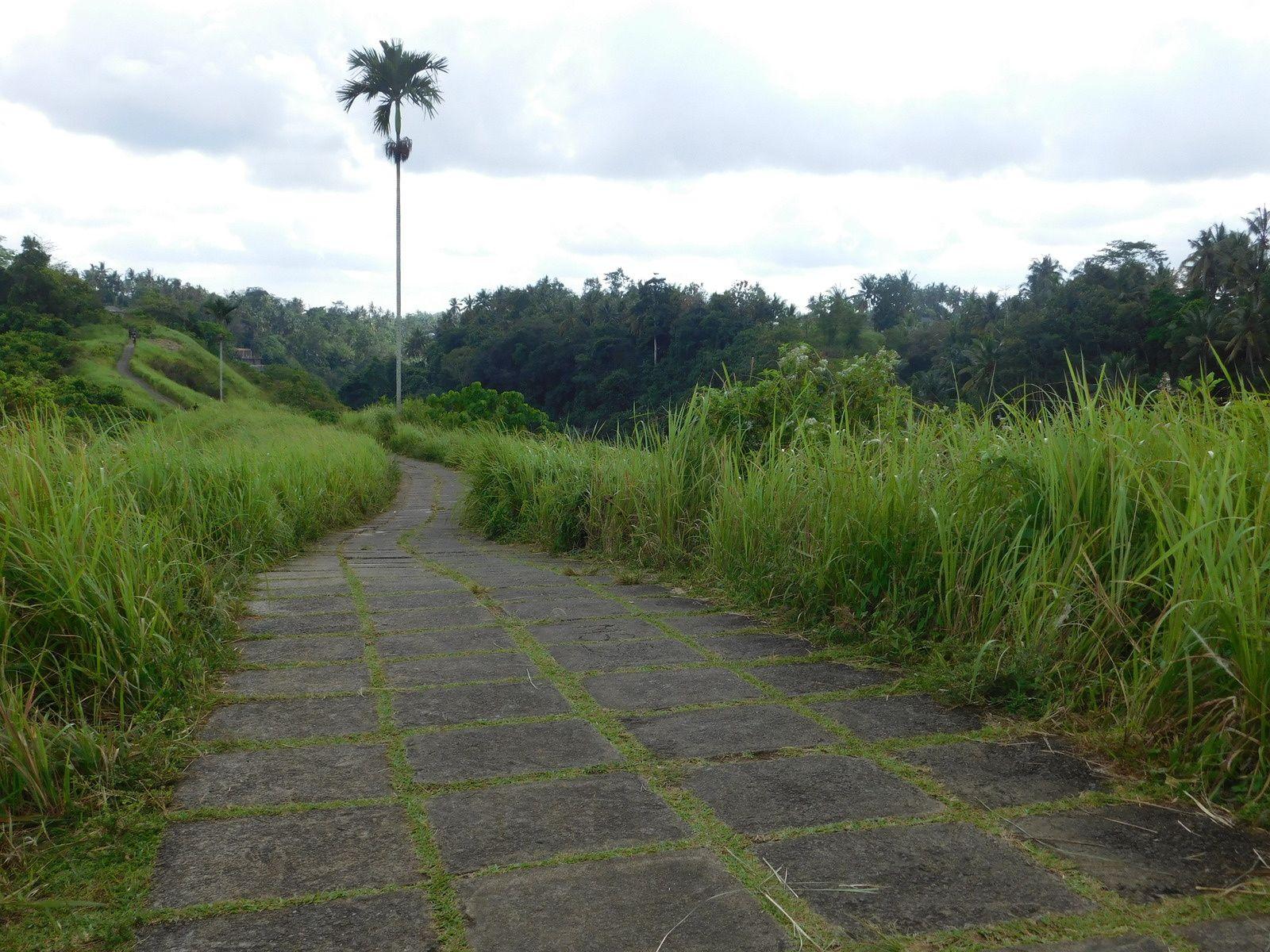 Souvenirs de ballades dans la campagne d'Ubud à Bali. N°1.