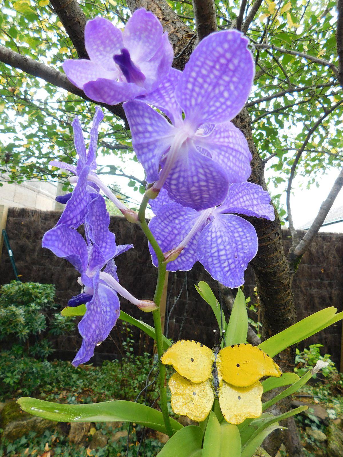 Vanda et papillon jardin de for Jardin hamel papillon 2016