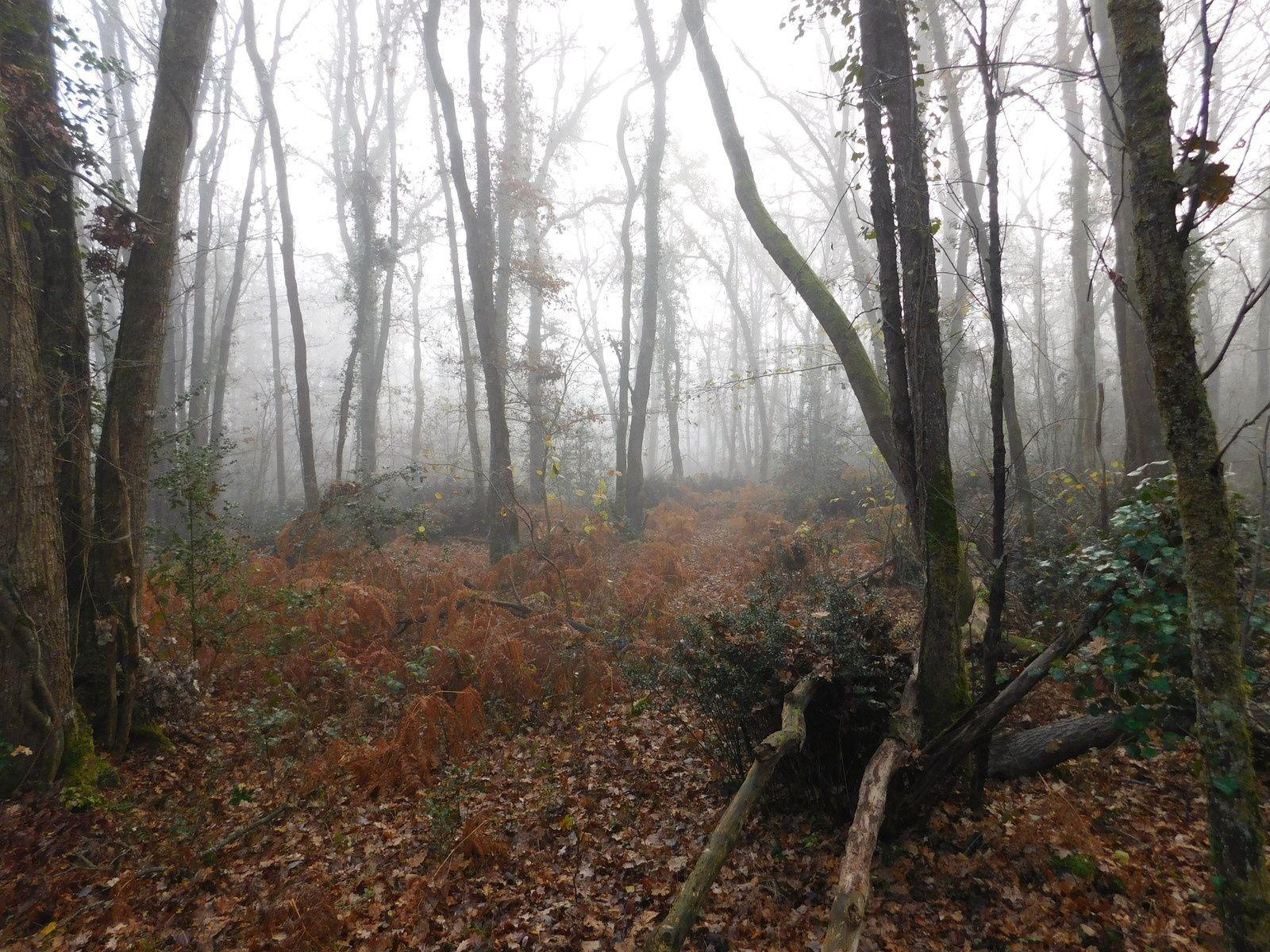Promenons nous dans les bois.