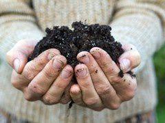 Une bactérie potentiellement mortelle dans du compost !