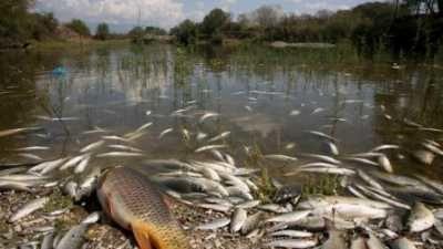 En Bretagne, un pesticide éradique toute vie aquatique