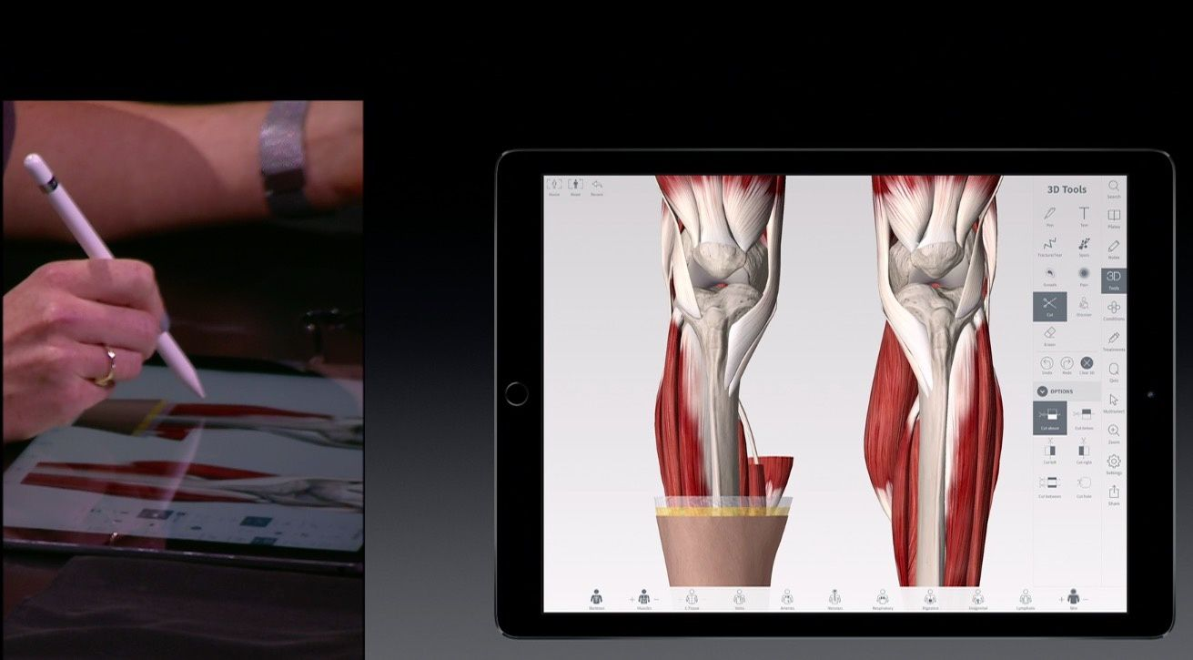 Anatomie sur iPadPro et Apple Pencil ...