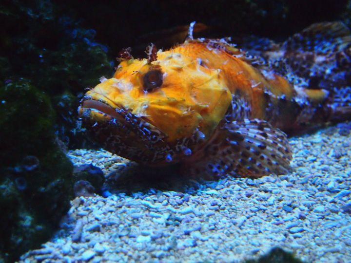 Musée océanographique à Monaco