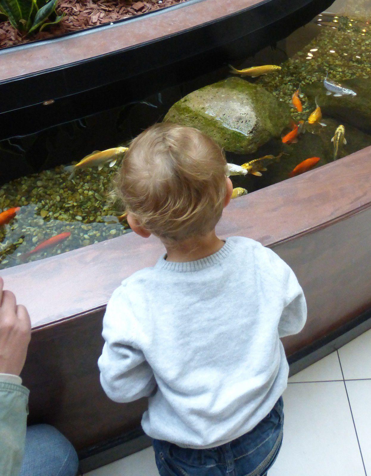 Des jolis poissons!