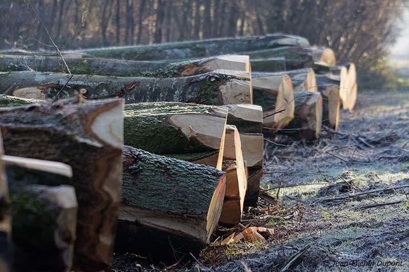 Ambiance hivernale en forêt de Crécy