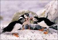Conversationpinguins