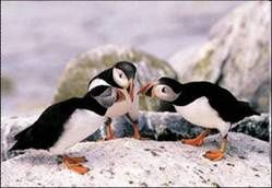 Conversationpinguins_1