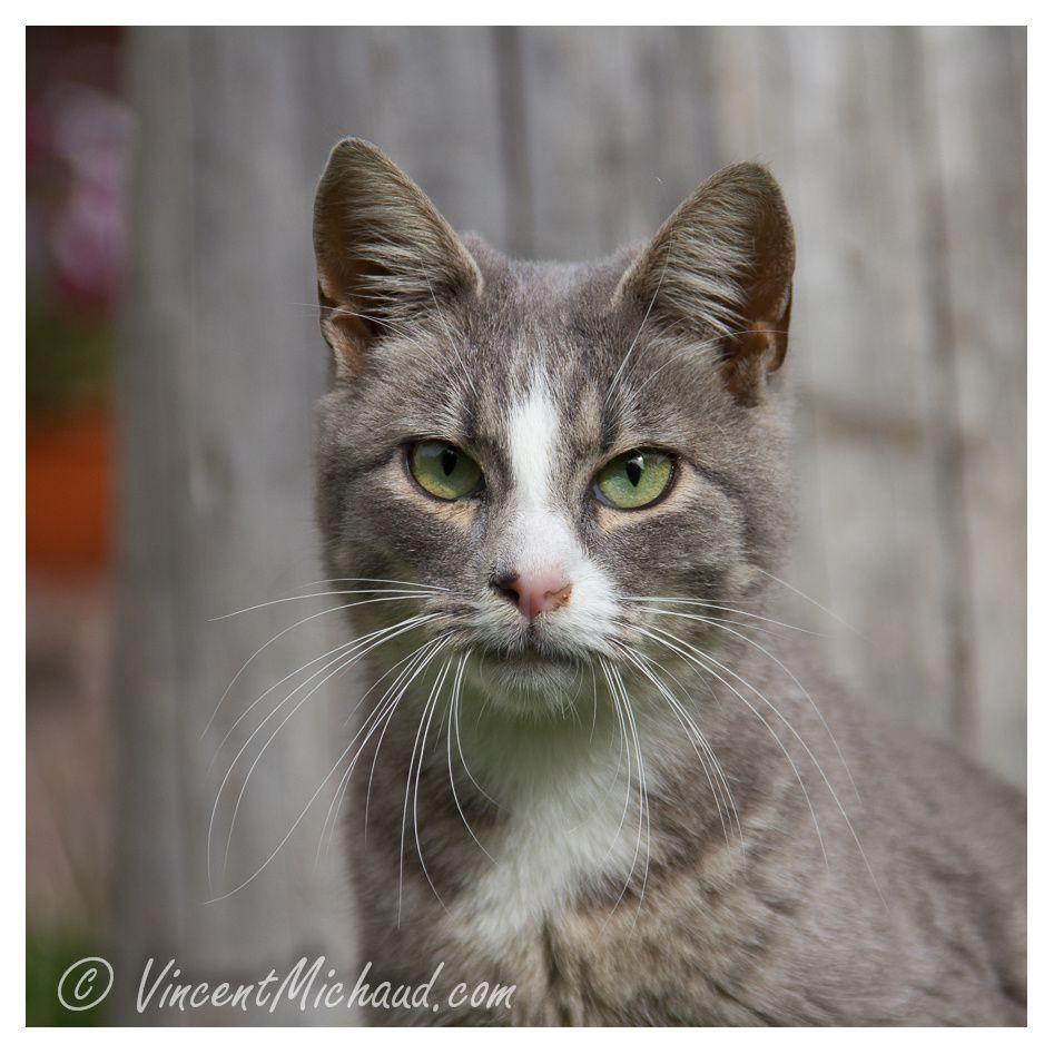 Galerie de portraits de mes amis les chats