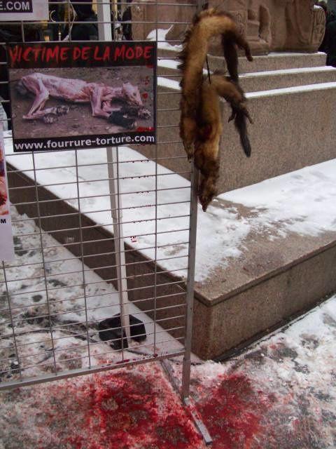 Stand pour la Journée sans fourrure - Metz