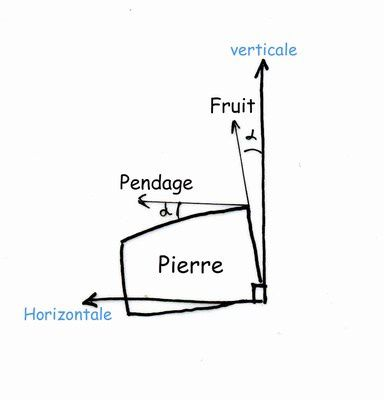 fruit et pendage