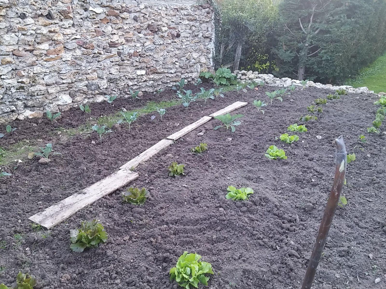 Mon jardin reprend forme