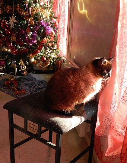 Fait trop froid dehors ! un temps à pas mettre un chat dehors ! Brrrr