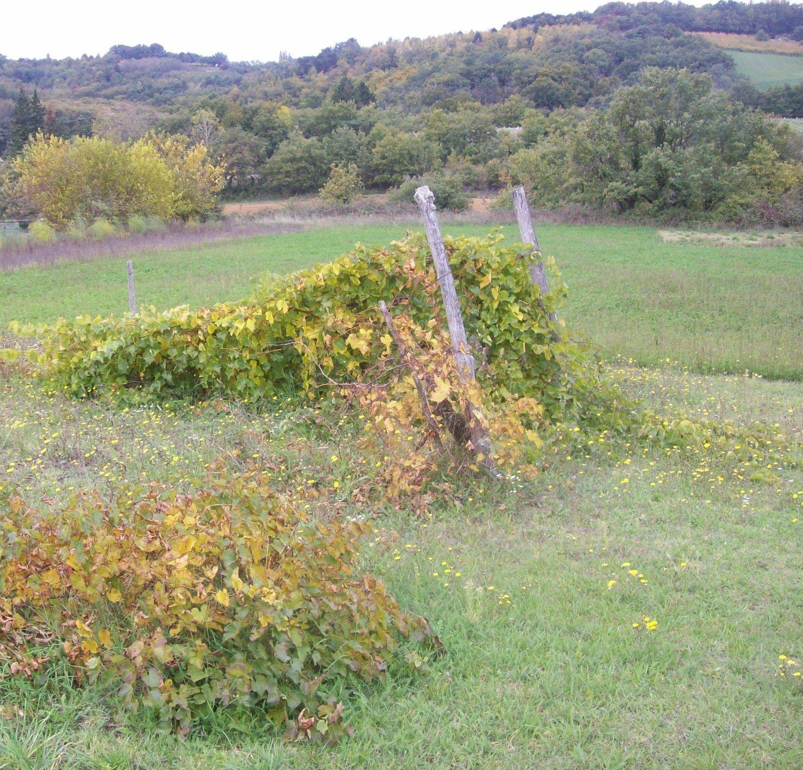 photos prises par Régis Roux le 22 octobre 2015 dans la Drôme des collines.