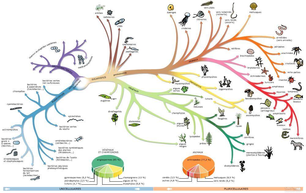 Classification des êtres vivants