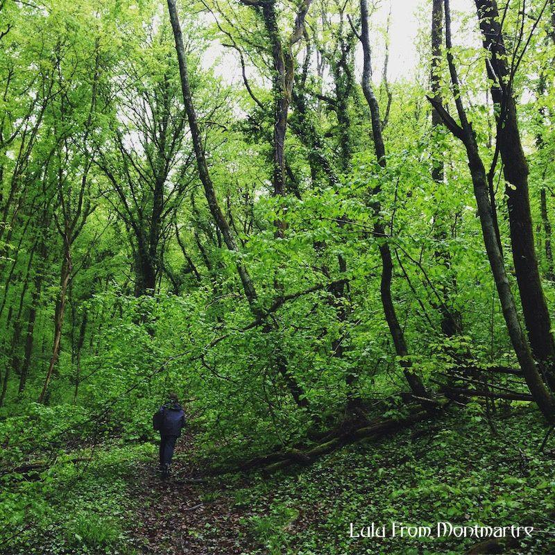 01. Forêt bourguignonne, Viviers 89700