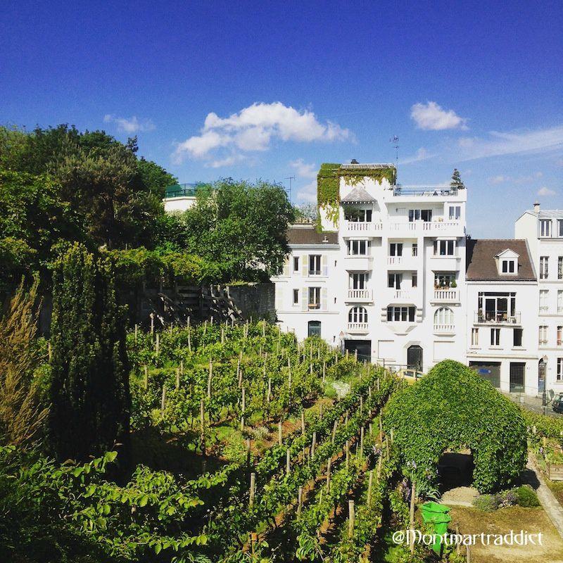 05. Vignes de Montmartre, 75018