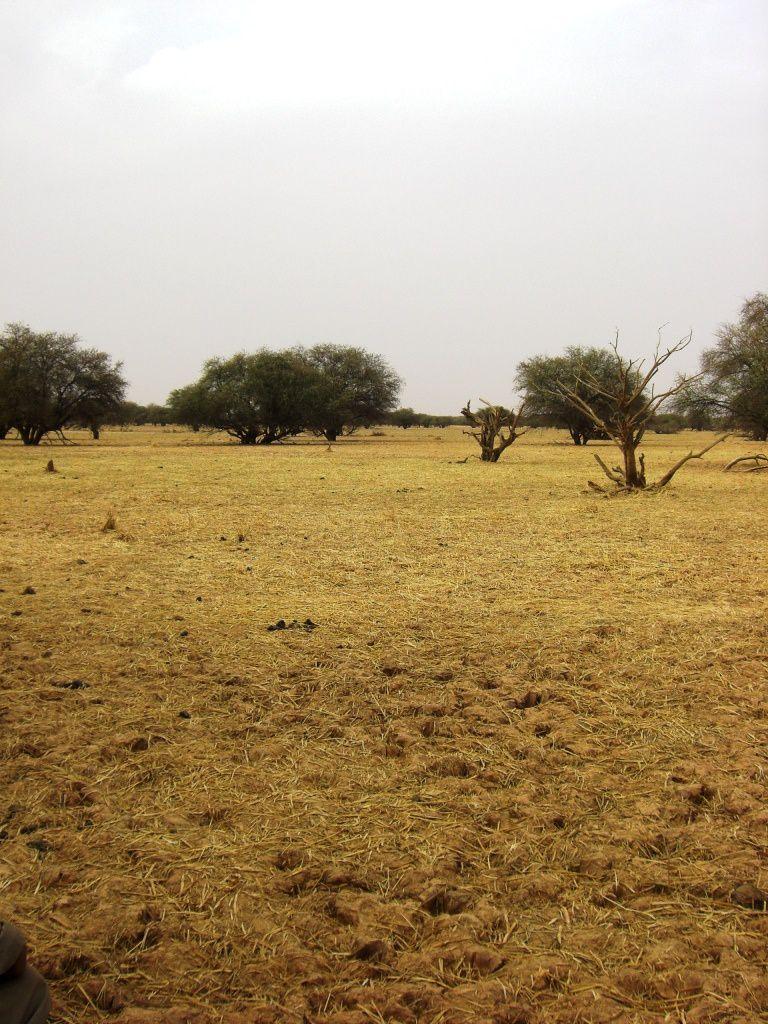 [Souvenir] Les elephants du Gourma, Jour 1