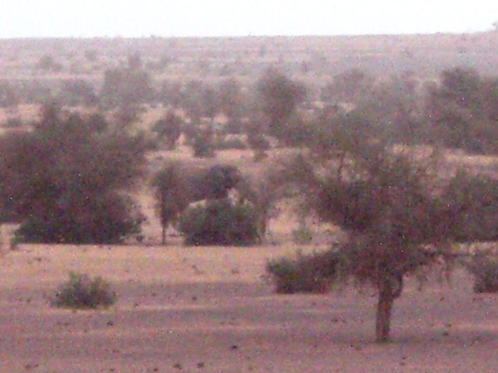 [Souvenir] Les elephants du Gourma, Jour 2
