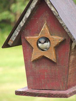 bird house plans and kits