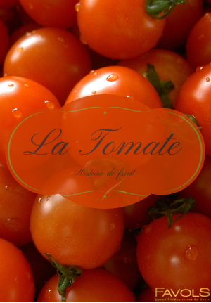 Portrait de fruit : La Tomate