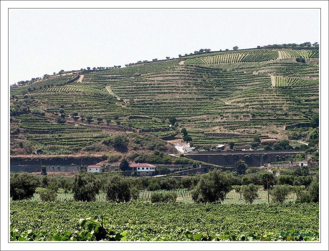 Les vignes de Porto / © DR