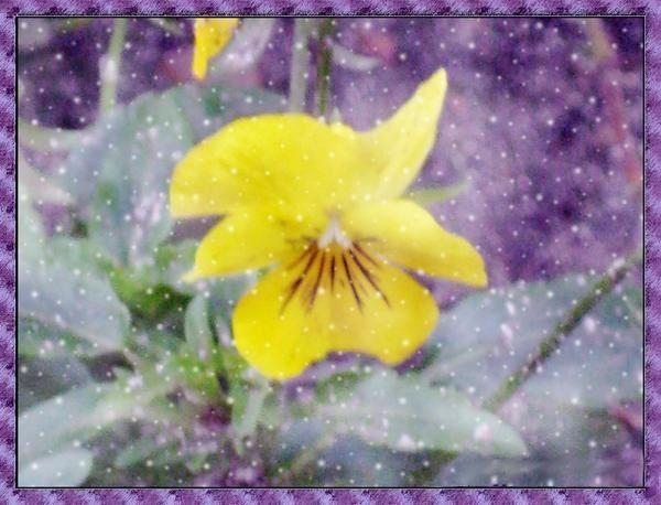 La p'tite fleur sous le mauvais temps