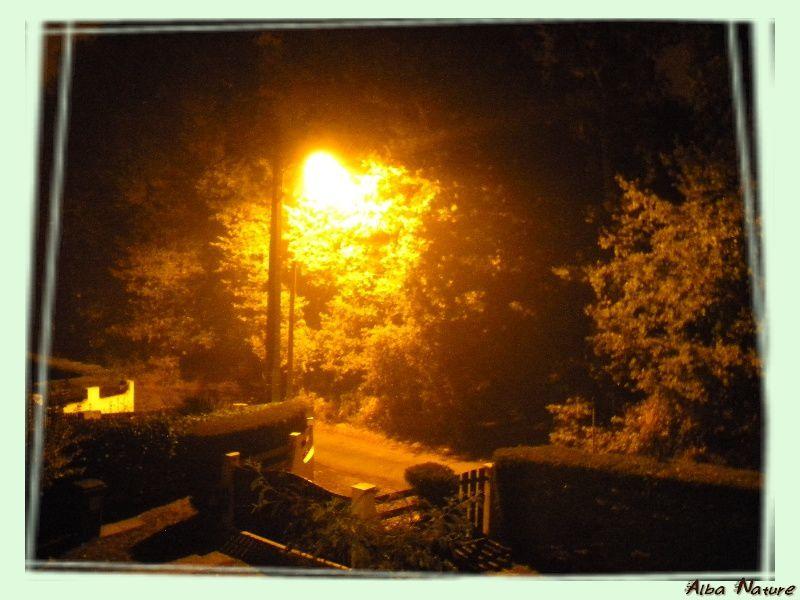 """<span style=""""font-size: 14px;"""">rue dans la brume et lampadaire</span>"""