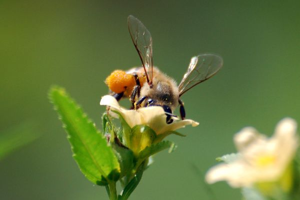 Carnet apicole du mois d'octobre