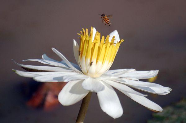 Carnet apicole du mois de novembre