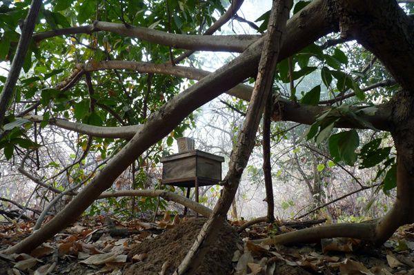 Ruche Langstroth de Moussa, que nous plaçons dans un autre site, au coeur d'une forêt galerie.