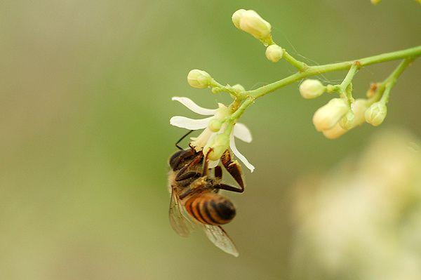 Carnet apicole du mois de février