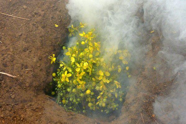 """ETAPE 4 : Ajouter les autres végétaux en """"grande quantité"""" (au pif, on a rempli le trou) sur le feu, afin que ce dernier ne brûle plus mais fume."""
