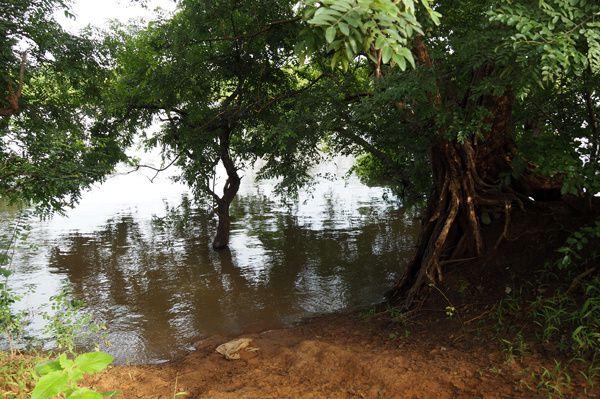 L'accès à la pirogue depuis mon terrain, d'habitude l'eau est 10m plus bas !