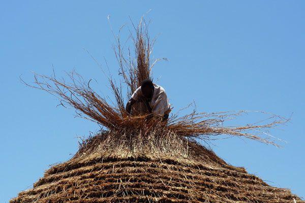 La paille retournée est alors dépliée sur le toit.