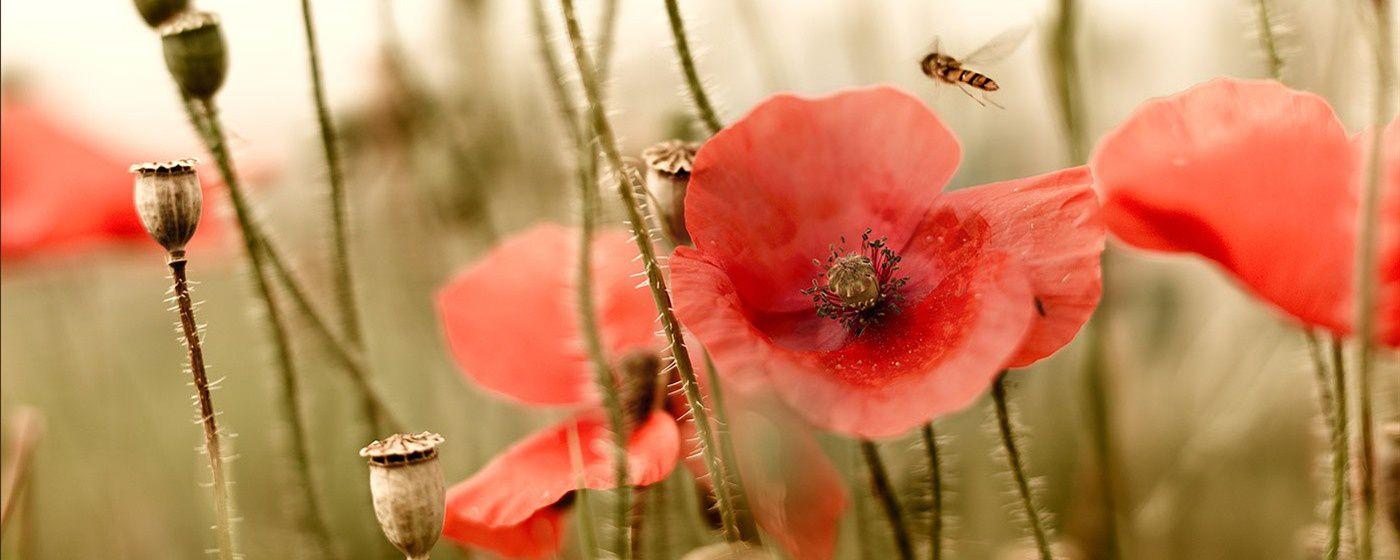 1ère guerre mondiale : Ypres, lieu de mémoire