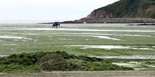 La mer et l'océan, le mauvais côté : Les algues vertes maudites, Lenaïg