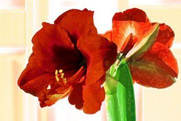 Coucou du haïku : les fleurs d'hiver - Lenaïg