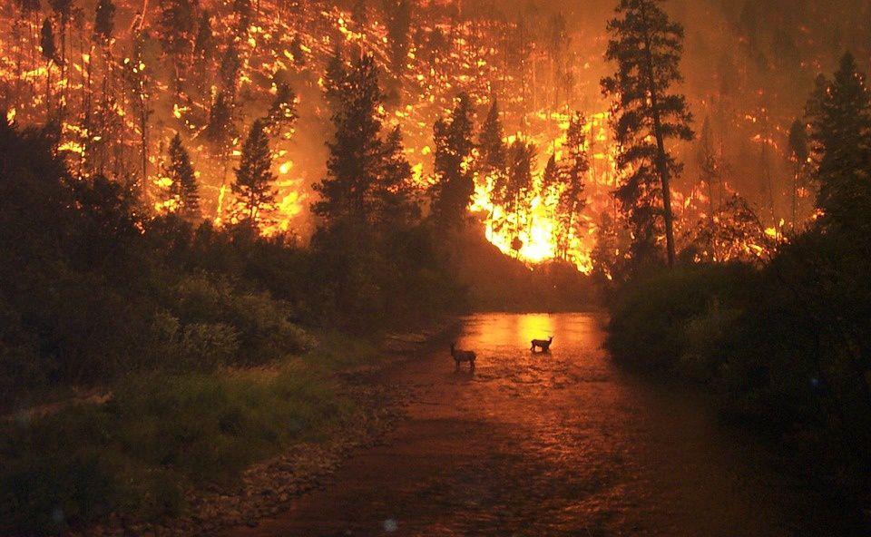 La tragédie de l'incendie, la suite des amis