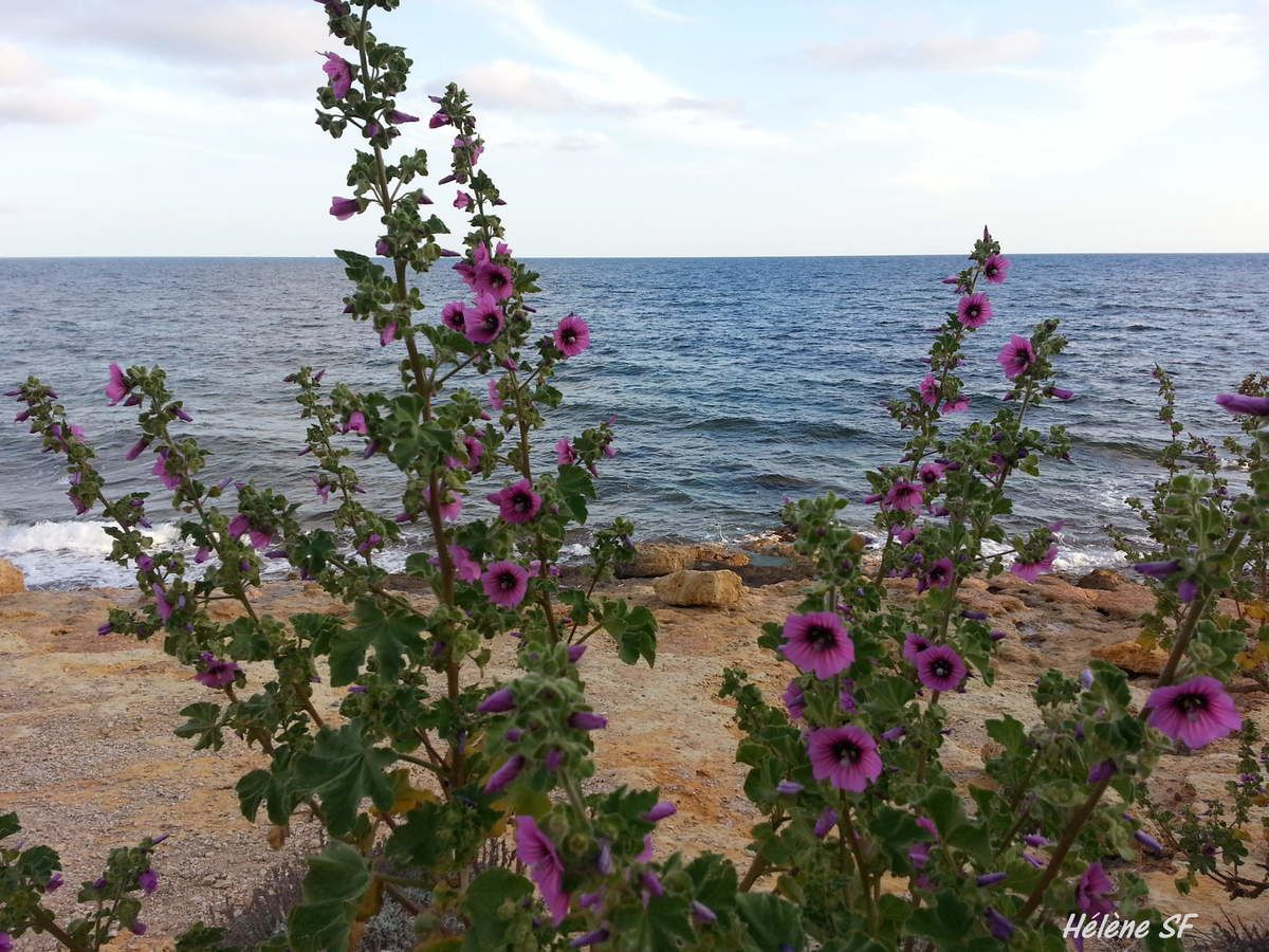 http://www.helenesf.fr/2015/04/promenade-du-phare-a-carry-le-rouet-cote-bleue.html