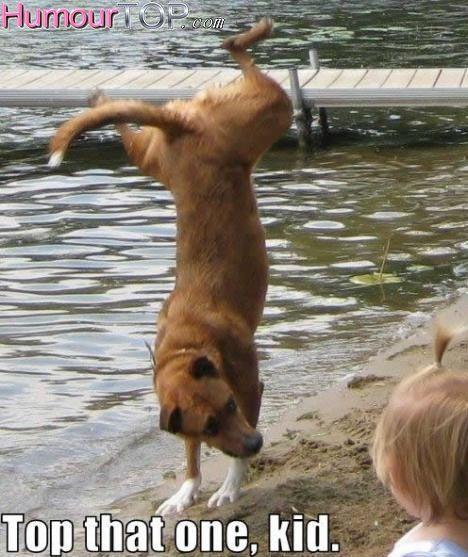 http://humourtop.com/photos-humour-chiens/index2.html#.V4CmADXujIU