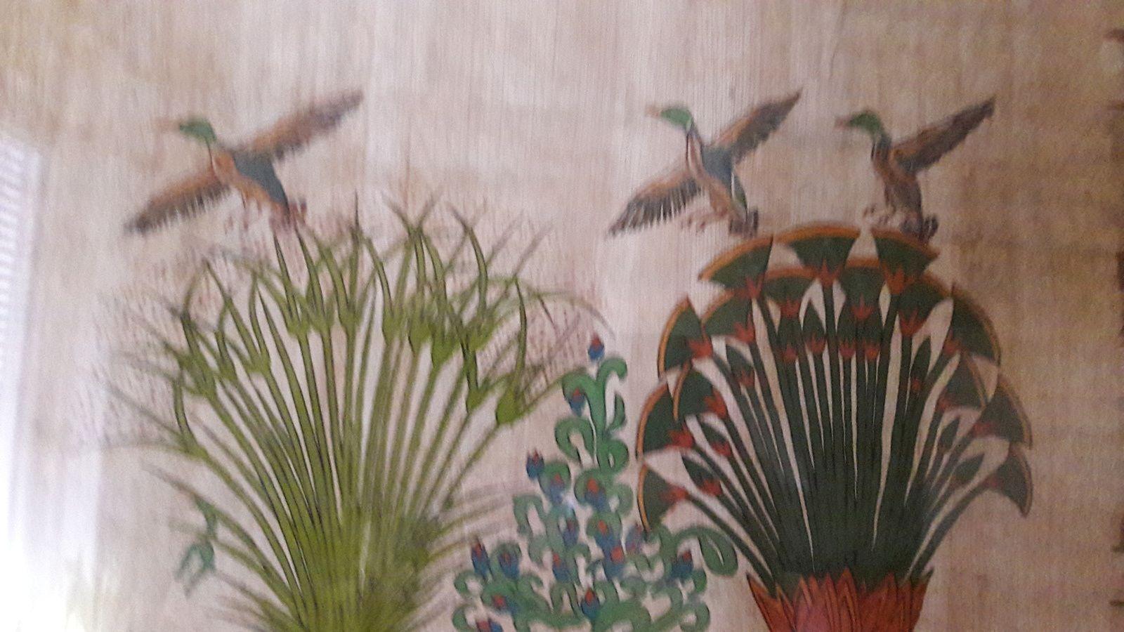 Nénuphars et autres plantes d'eau, les haïkus de Lenaïg