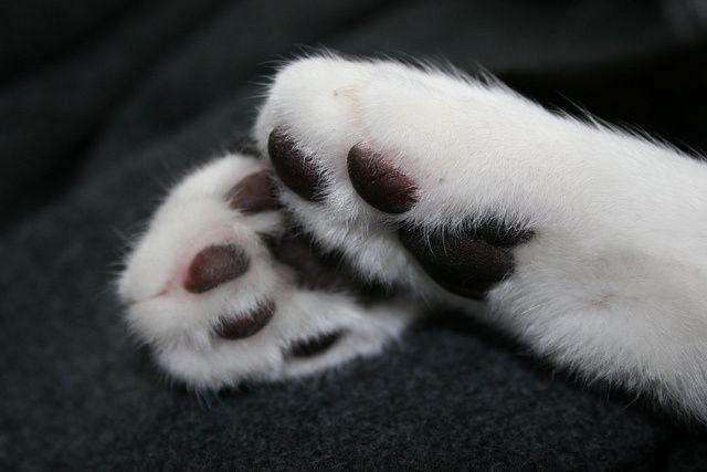Les pieds ! Le thème de haïkus pour vendredi 2 juin