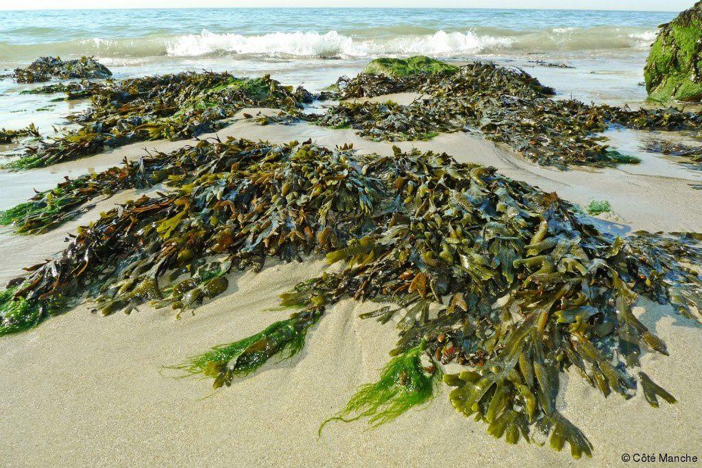 Fête Nat' d'abord, puis les algues sur la plage, la suite des amis