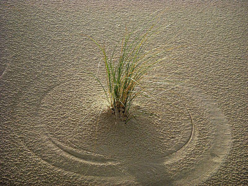 Après les algues, le sable ! Thème de haïkus pour vendredi 21 juillet et billet d'humeur de Lenaïg