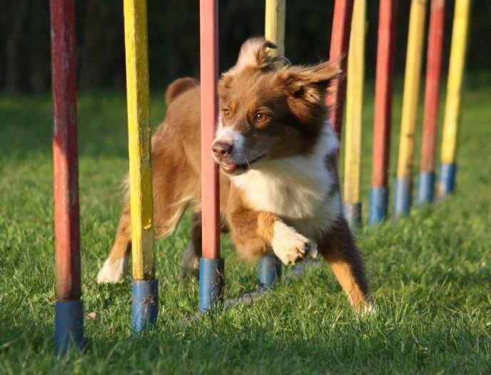 club canin arras