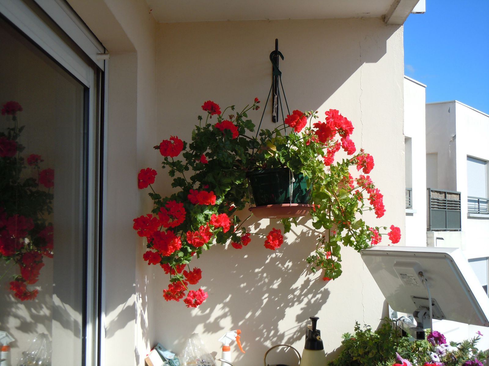 fleurs et plantes mon coin pour partager mes divers passions. Black Bedroom Furniture Sets. Home Design Ideas